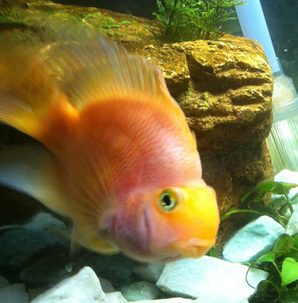 Meet our library pets media center for Ugly fish pictures